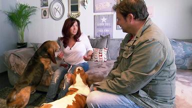 Der Hundeprofi - Heute U.a. Mit: Santra Mit Den Bassets Hubertus Und Luise