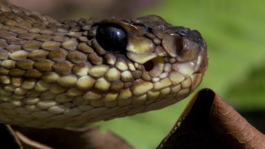 Schlangen - Besser Als Ihr Ruf - Schlangen - Besser Als Ihr Ruf