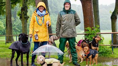Hundkatzemaus - Heute U.a.: Hundebeschäftigung An Regentagen