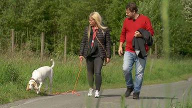 Der Hundeprofi - Heute U.a. Mit: Isabell Mit Jagdhund Vida