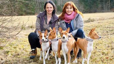 Hundkatzemaus - Thema Heute U.a.: Rasseportrait Basenjis