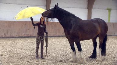 Die Pferdeprofis - Heute U.a.: Wallach \