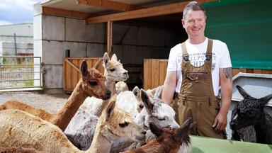 Bauer Sucht Frau - Alpakazüchter Henry Freut Sich Auf Seine Auserwählte