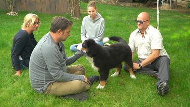 Der Hundeprofi Unterwegs - Thema Heute: Die Welpen Sind Los