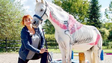 Hundkatzemaus - Thema Heute U.a.: Pferdefitness! Wie Gezieltes Training Pferde Glücklich Und Gesund Macht