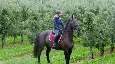 Die Pferdeprofis - Heute U.a.: Schecke Joeys Kleine Macke