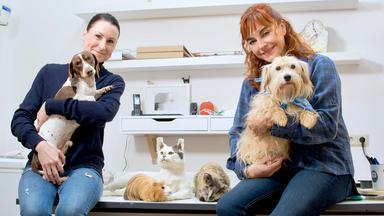 Hundkatzemaus - Thema Heute U.a.: Diana Eichhorn Beim Tierpräparator
