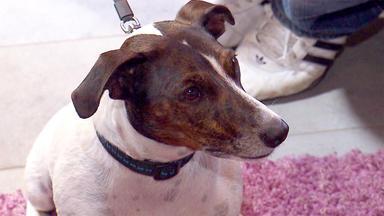Der Hundeprofi - Heute U.a.: Rüde \