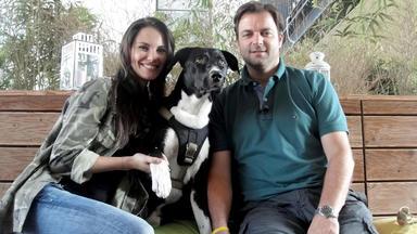 Der Hundeprofi - Heute U.a. Mit: Simone Und \
