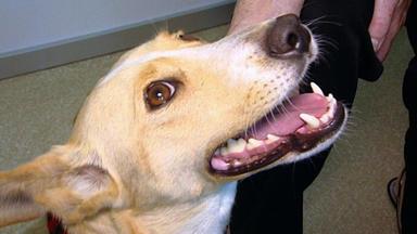 Menschen, Tiere & Doktoren - Ohne Garantie