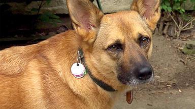 Der Hundeprofi - Thema Heute U.a.: Hiltrud Mit \