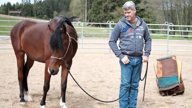 Die Pferdeprofis - Heute U..a.: Connemara-pony \