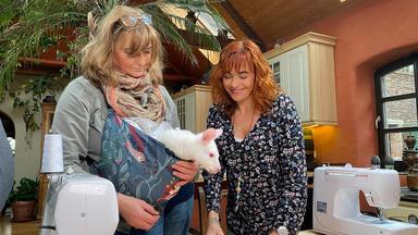 Hundkatzemaus - Thema U.a.: Australische Tiere In Not