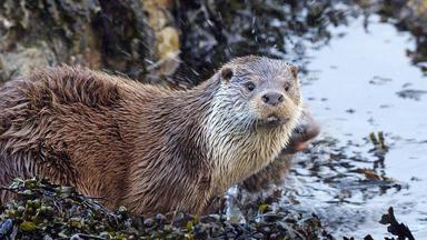 Insel Der Otter - Insel Der Otter
