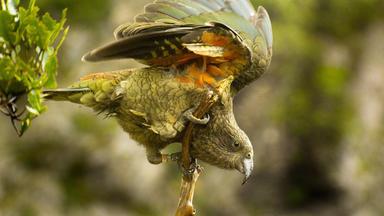 Superhirn Im Federkleid - Kluge Vögel Im Duell - Superhirn Im Federkleid - Kluge Vögel Im Duell