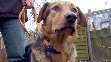 Hundkatzemaus - Thema Heute U.a.: Dog-tracker