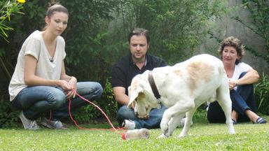 Der Hundeprofi - Heute Mit: Randi Schleß Mit \