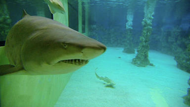 Menschen, Tiere & Doktoren - Hai-op