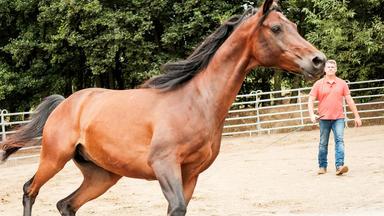 Die Pferdeprofis - Heute U.a.: Araber \