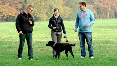 Der Hundeprofi - Heute Mit: Mischlingshündin \