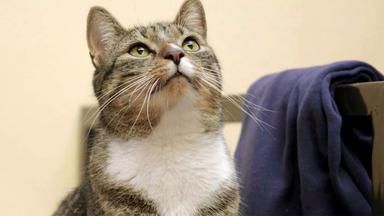 Hundkatzemaus - Themen U. A.: Gefängniskatzen Und Hundeleinen