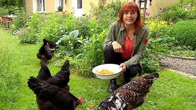 Hundkatzemaus - Themen U. A.: Die Fußbahns Und Hühnerhaltung
