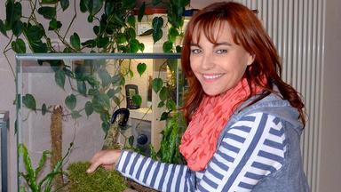 Hundkatzemaus - Thema U. A.: Das Perfekte Terrarium Für Tausendfüßler