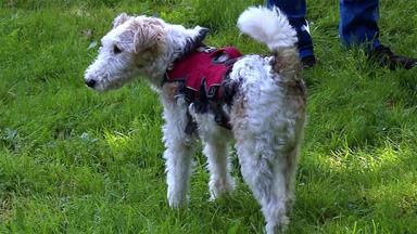 Der Hundeprofi - Heute U.a.: Vierbeiniger Freund Für \
