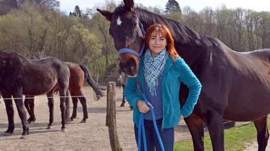 Hundkatzemaus - Thema Heute U. A.: Pferdespielzeug