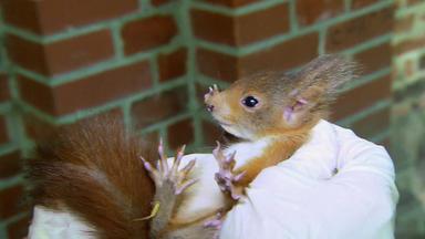 Menschen, Tiere & Doktoren - Ein Eichhörnchen Läuft Rund!
