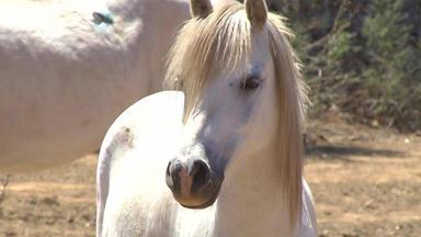 Hundkatzemaus - Thema U. A.: Gloria - Einsatz Für Pferde