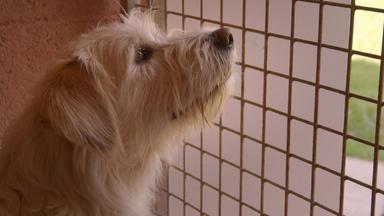 Hunde - Die Treuen Gefährten - Hunde - Die Treuen Gefährten