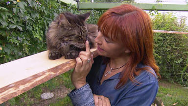 Hundkatzemaus - Thema U. A.: Katzenfreigehege