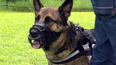 Der Hundeprofi - Heute U.a.: Der Angriffslustige Duc