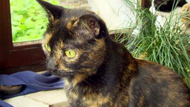 Menschen, Tiere & Doktoren - Kleine Katze, Große Stadt