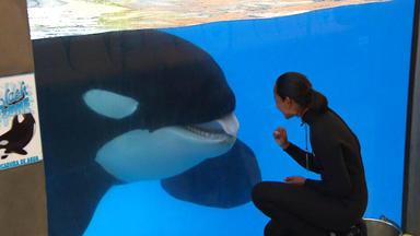 Menschen, Tiere & Doktoren - Orca-training