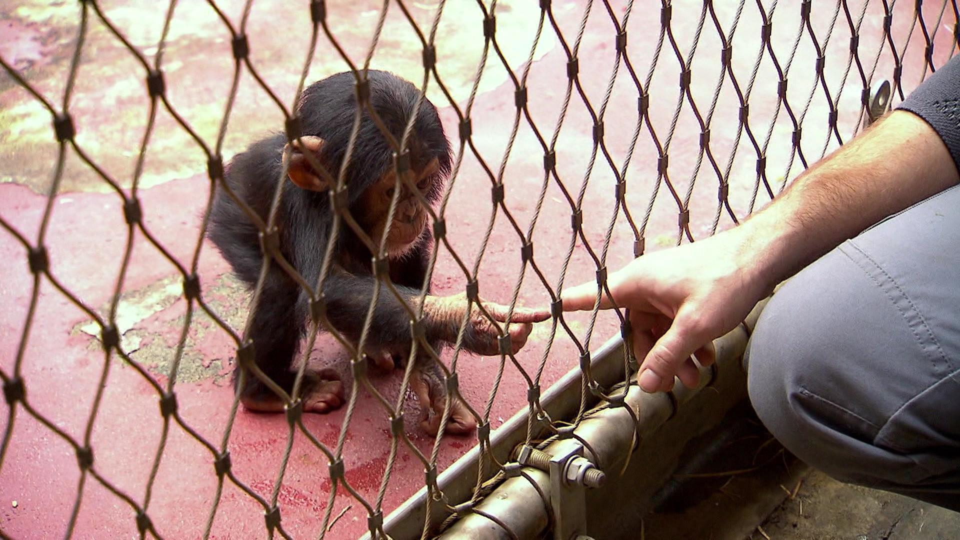 "Thema heute u.a.: Schimpansenbaby ""Dayo"" | Folge 9"