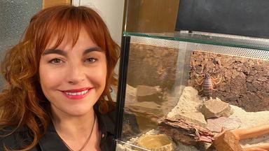 Hundkatzemaus - Thema U.a.: Faszination Skorpione