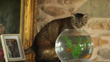Von Katze Und Maus - Das Ewige Duell - Von Katze Und Maus - Das Ewige Duell
