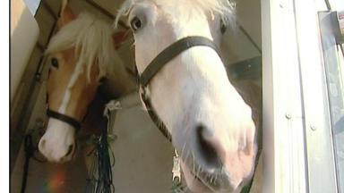 Wildes Kinderzimmer - Rettung Für Pferdekinder