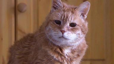 Hundkatzemaus - Thema U. A.: Wenn Katzen Alt Werden