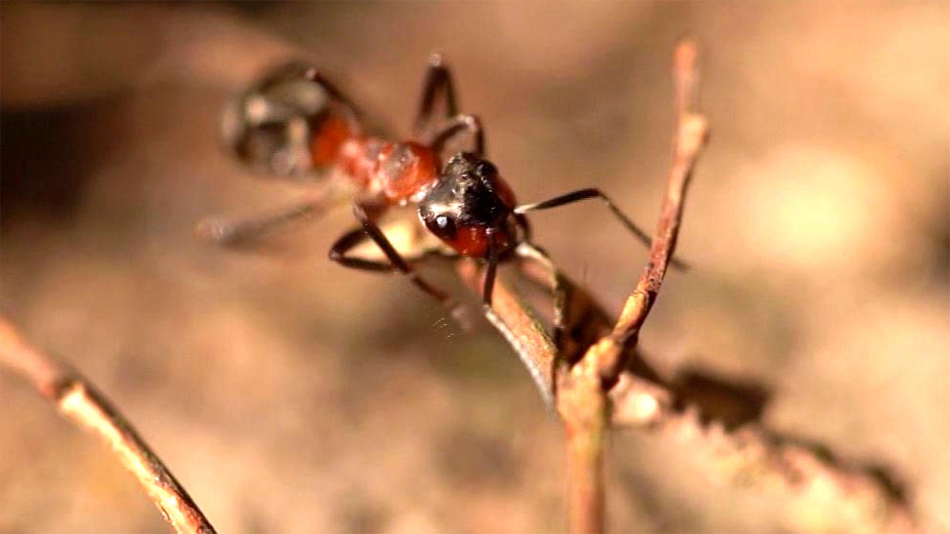 Thema u. a.: Ameisen umsiedeln | Folge 27