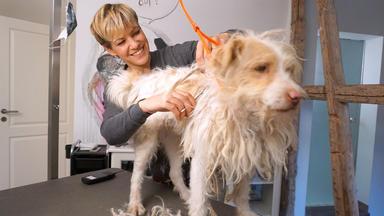 Hundkatzemaus - Thema U.a.: Die Hundeverschönerungsrubrik