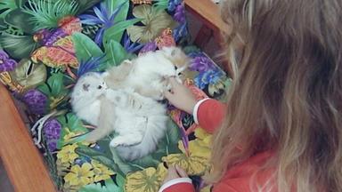 Wildes Kinderzimmer - Wuschelige Riesenüberraschung