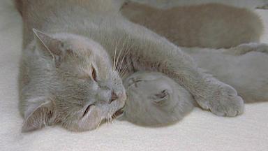 Wildes Kinderzimmer - Unaussprechlich Schöne Kitten
