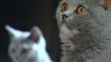 Wildes Kinderzimmer - Große Kunst Mit Kleinen Katzen