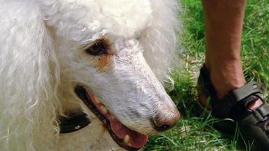 Menschen, Tiere & Doktoren - Bissiger Hund