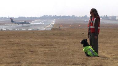 Martin Rütters Helden Auf Vier Pfoten - Thema U.a.: Border Collies Am Flughafen Von Johannesburg