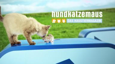 Hundkatzemaus - Thema U.a.: Gute Nacht - Wenn Tiere Schlafen