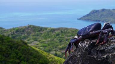 Aufbruch Der Schwarzen Krabben - Aufbruch Der Schwarzen Krabben